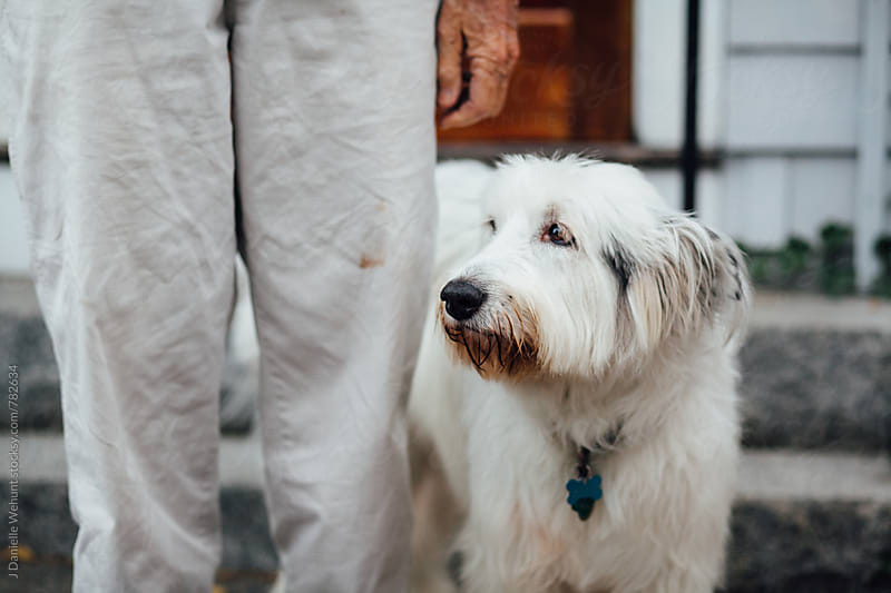 A white wheaton terrier standing outside beside an anonymous man. by J Danielle Wehunt for Stocksy United