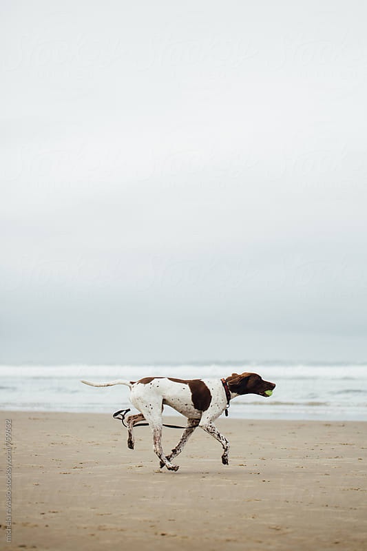 Dog running on the beach by michela ravasio for Stocksy United