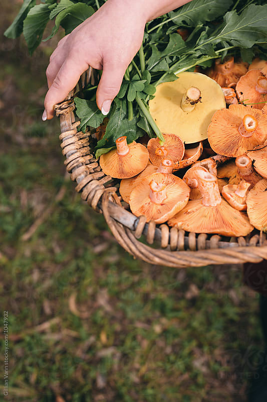 woman holding a basket filled with freshly harvested wild mushrooms by Gillian Vann for Stocksy United