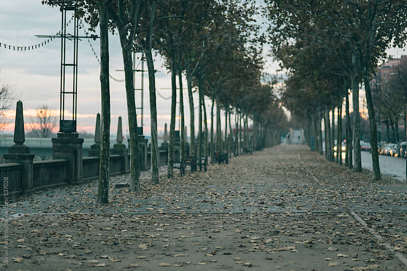 detail of a street full of leaves in autumn by Javier Pardina for Stocksy United