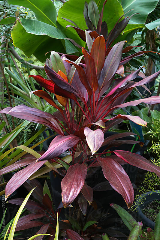 Exotic red greenhouse plant by Marcel for Stocksy United