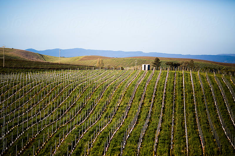 Napa Valley Hills by Thomas Hawk for Stocksy United