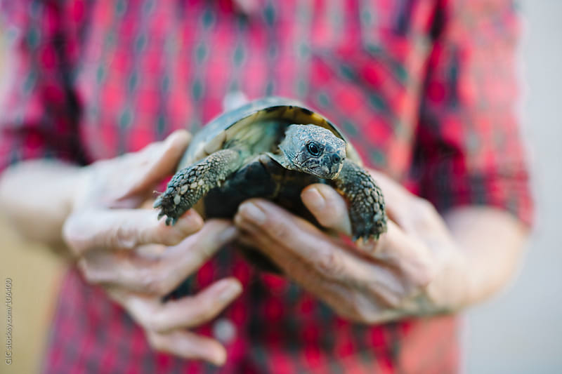 Hands holding a turtle by GIC for Stocksy United