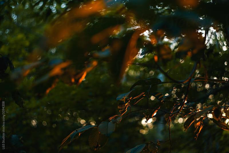 Sunset light by L&S Studios for Stocksy United