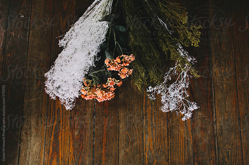 Dried floral by Dylan M Howell Photography for Stocksy United