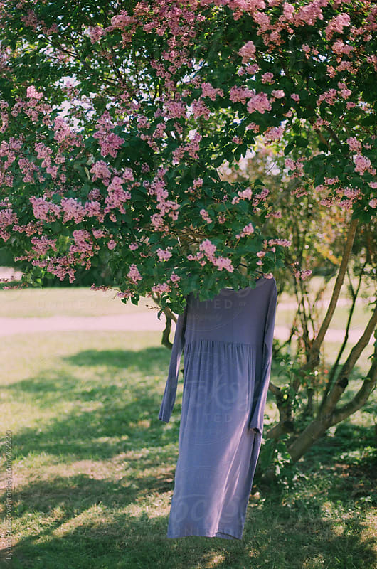 Lilac dress hanging on a tree in blossom by Liubov Burakova for Stocksy United