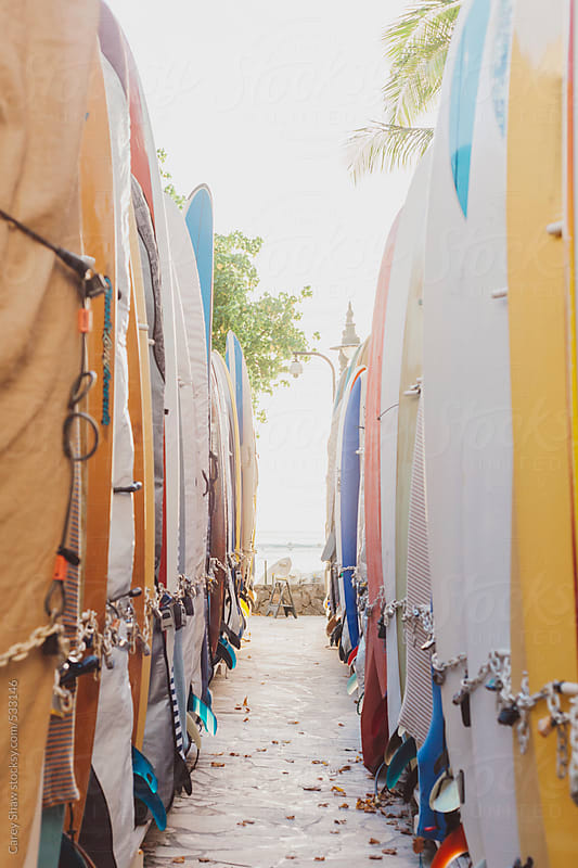 Rows of surfboards at beach by Carey Shaw for Stocksy United
