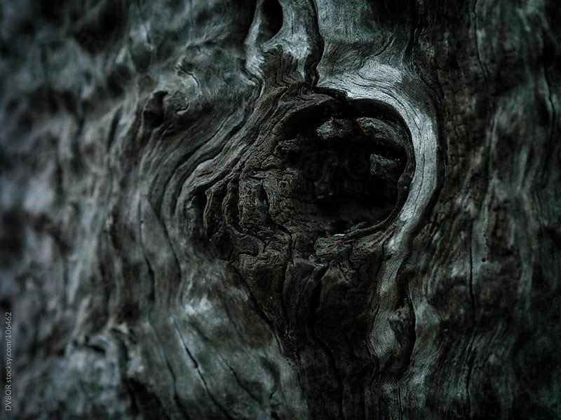 Macro - closeup of tree bark by DV8OR for Stocksy United