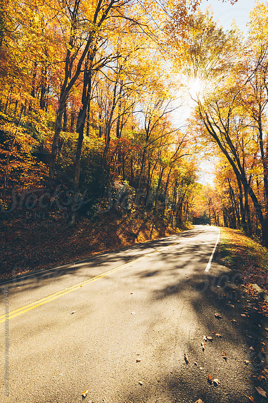 Road in the forest by Good Vibrations Images for Stocksy United