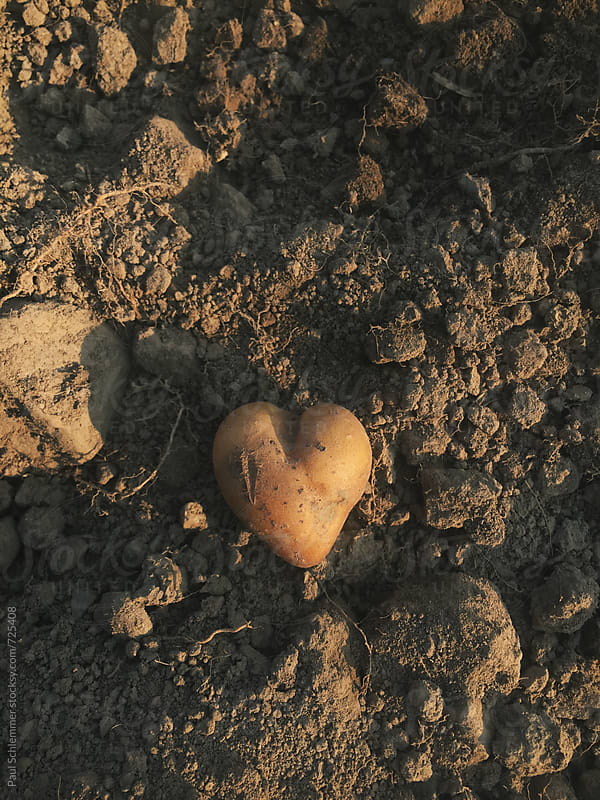 heart shaped potato by Paul Schlemmer for Stocksy United