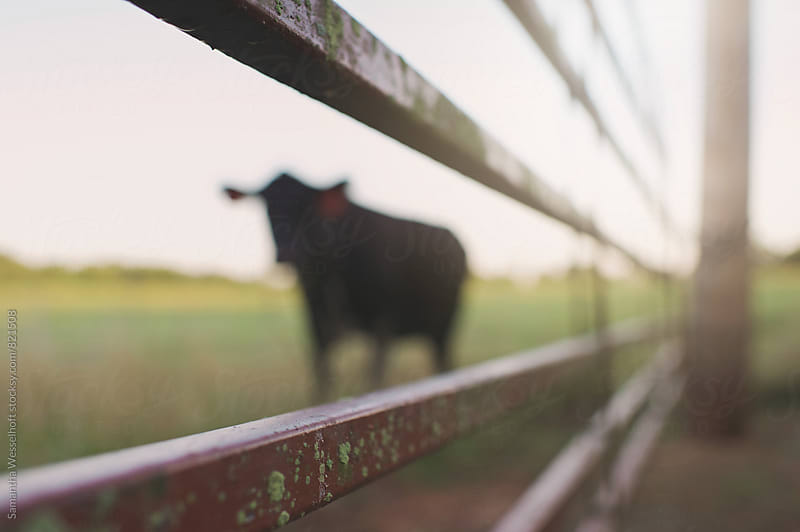 the view through the fence by Samantha Wesselhoft for Stocksy United