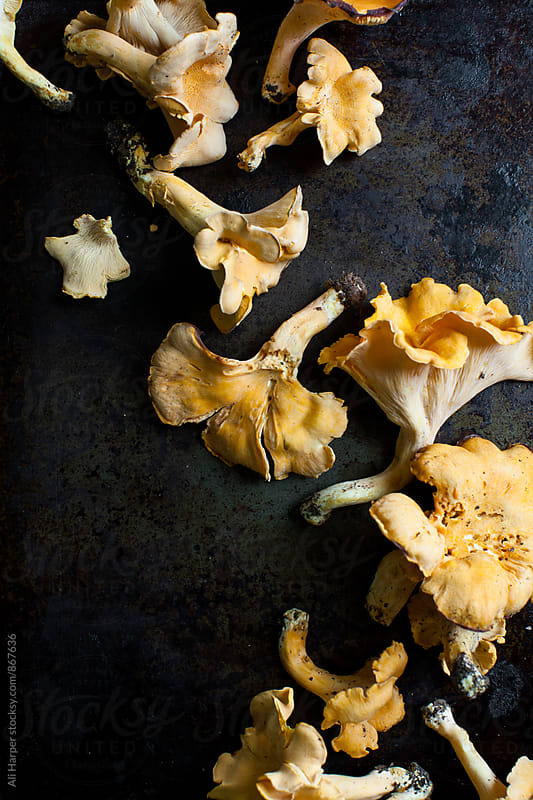 Group of chanterelle mushrooms by Ali Harper for Stocksy United