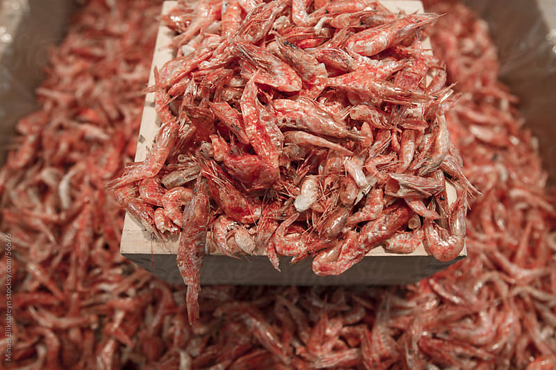 Bins with dried krill for sale at an Asian seafood market by Mihael Blikshteyn for Stocksy United
