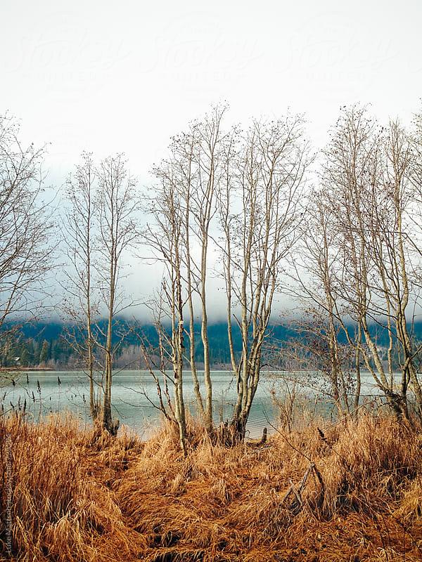 Leafless Trees Standing Near Edge Of Lake  by Luke Mattson for Stocksy United