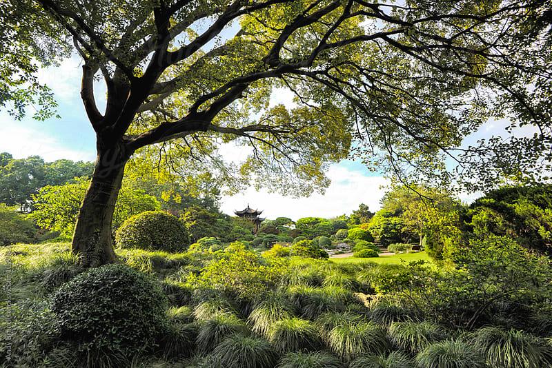 Peony Garden (Hangzhou) by Andy Brandl for Stocksy United