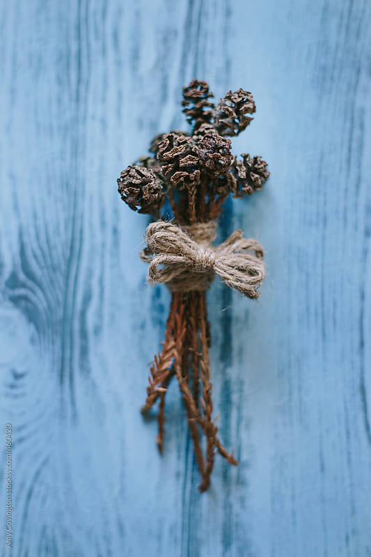 Bouquet of pine cones by Amy Covington for Stocksy United