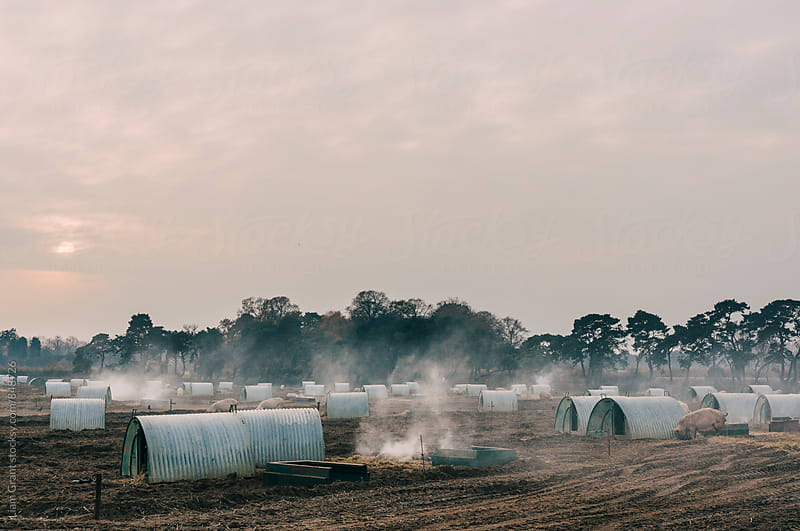 Burning old straw bedding on a pig farm at sunset. Norfolk, UK. by Liam Grant for Stocksy United