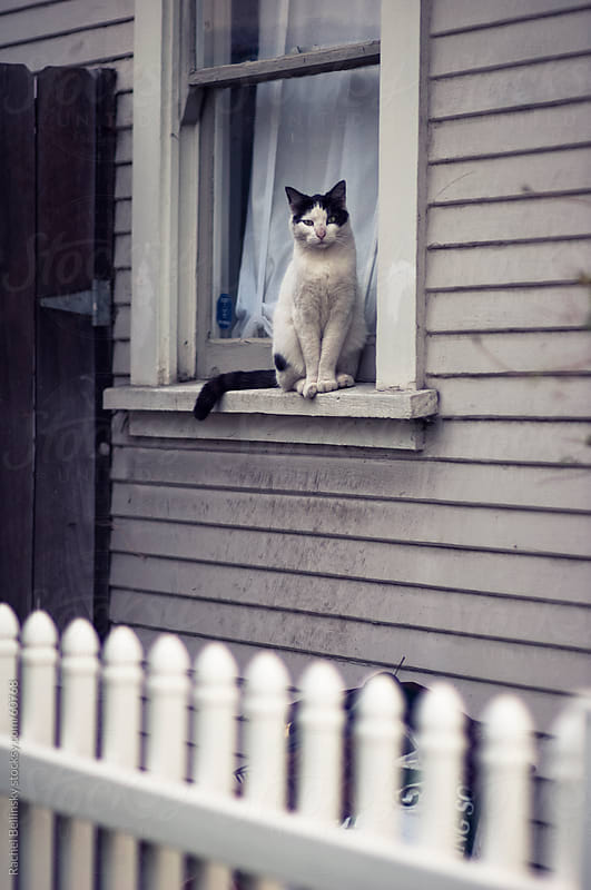 Black and white cat sits in window sill behind picket fence by Rachel Bellinsky for Stocksy United