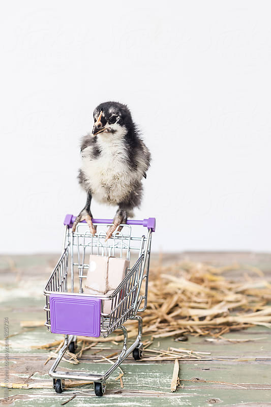 chick with trolley with 1 item by Gillian Vann for Stocksy United