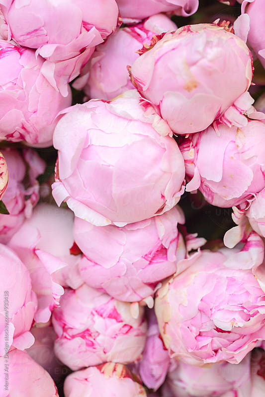 Stacked Peony flowers by Mental Art + Design for Stocksy United