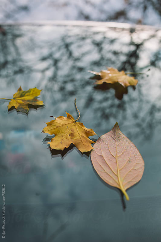 Fallen autumn leafs by Dejan Ristovski for Stocksy United