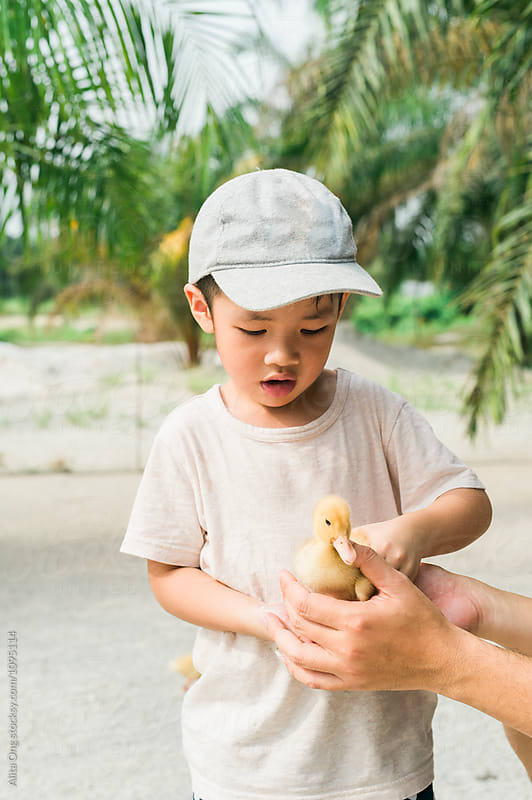 Little boy holding a duckling by Alita Ong for Stocksy United