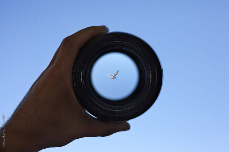 View through spyglass lens to the white seagull bird flying in the sky by Ilya for Stocksy United