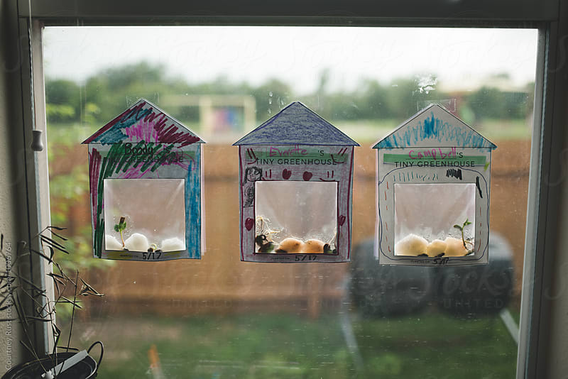 homeschool germination project by Courtney Rust for Stocksy United