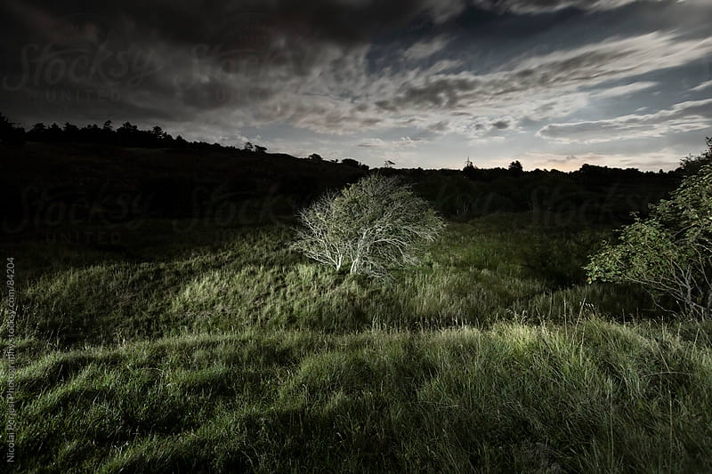 Trees in the hills by Nicolai Perjesi Photography for Stocksy United