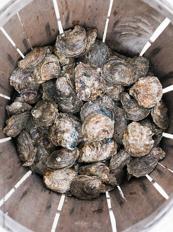 Pile of fresh raw oysters in basket at seafood restaurant by Matthew Spaulding for Stocksy United