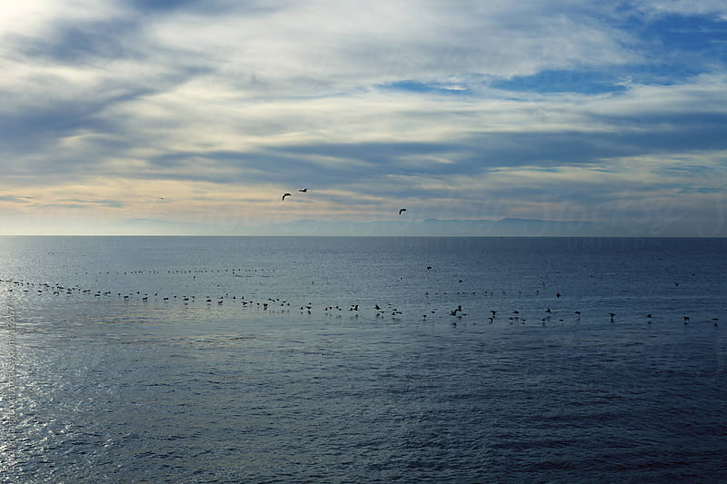 Pelicans flying low along the ocean in a line by Carolyn Lagattuta for Stocksy United