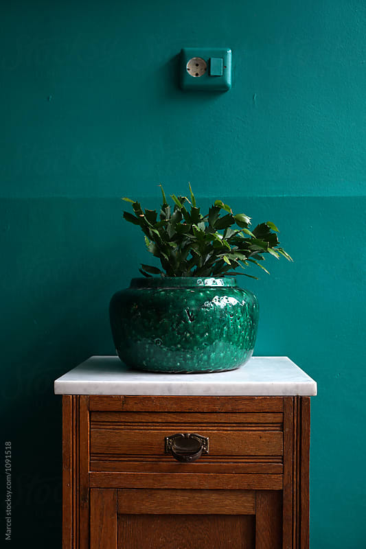 Vase with cactus plant in trendy room by Marcel for Stocksy United