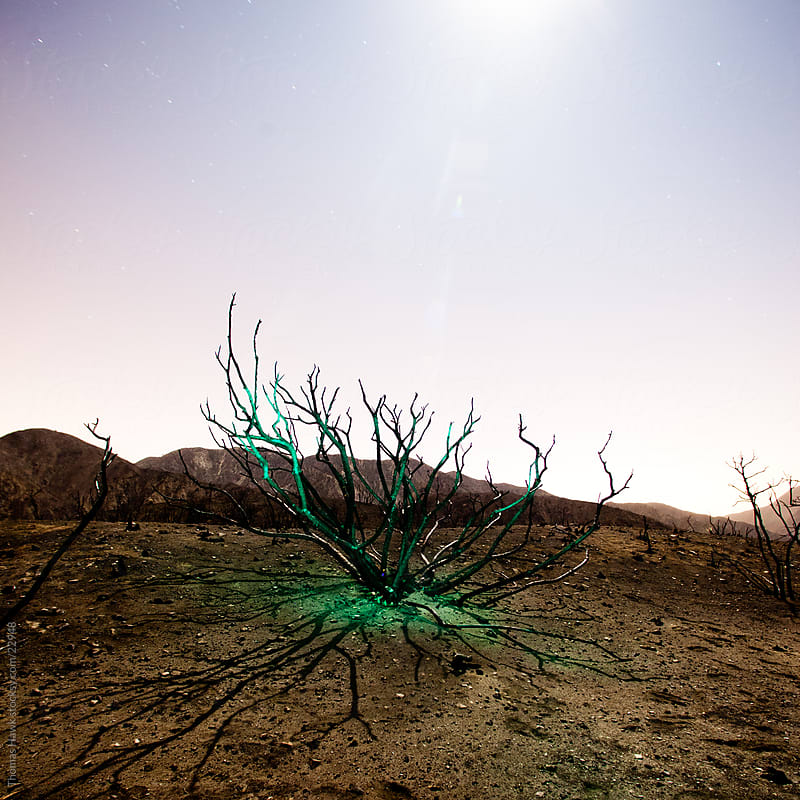 Skeleton of Tree at Night After Forest Fire by Thomas Hawk for Stocksy United