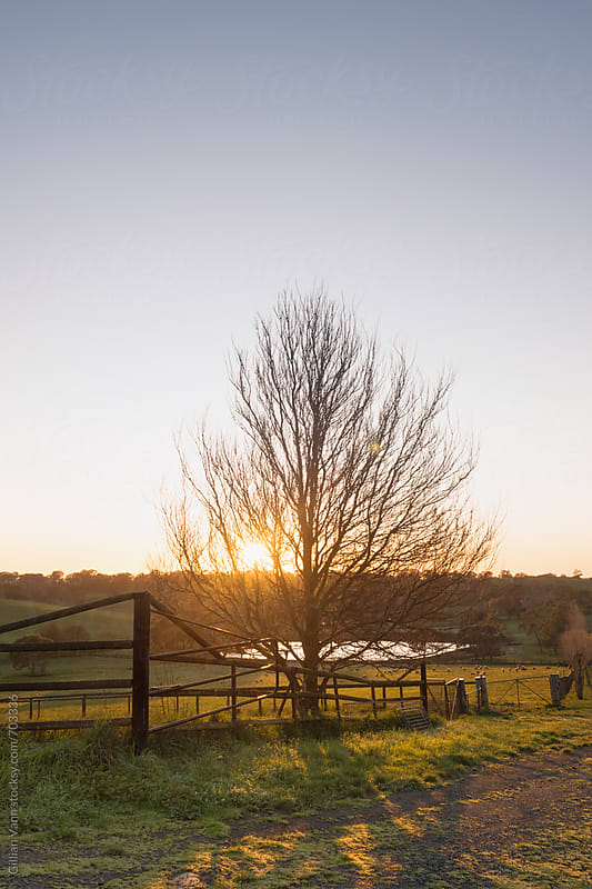 sunrise on the farm by Gillian Vann for Stocksy United