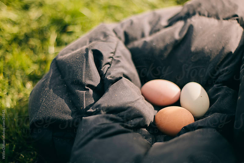 Fresh Chicken Eggs by Willie Dalton for Stocksy United