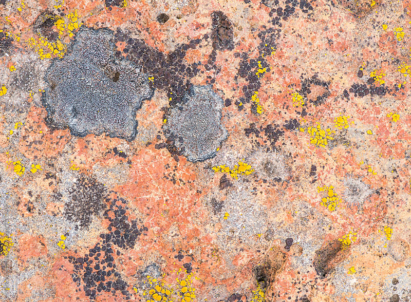 Lichen on rock, closeup by Mark Windom for Stocksy United