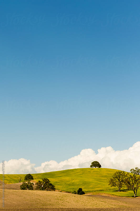 Rolling Hills with Green Grass and Blue Sky by Jayme Burrows for Stocksy United