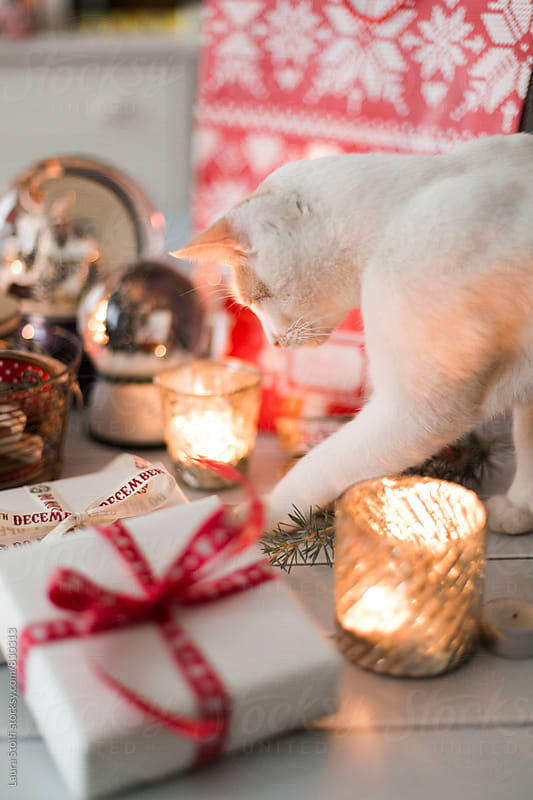 Curious cat exploring table with candles, snow globes and Christmas presents by Laura Stolfi for Stocksy United