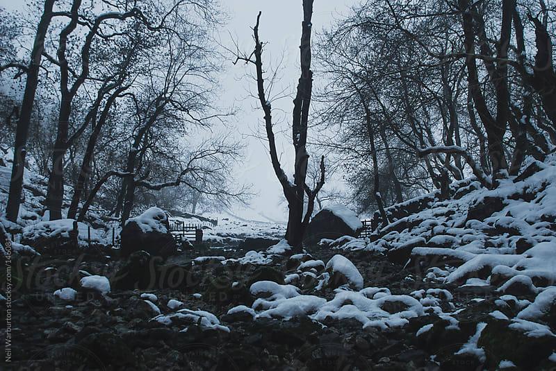 Still Winter Landscape by Neil Warburton for Stocksy United