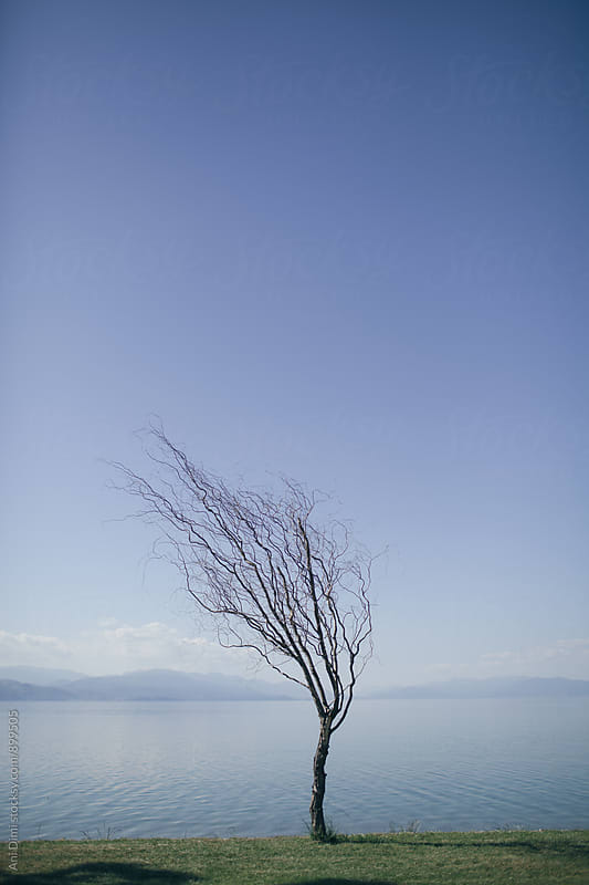 Alone tree at the lakeshore by Ani Dimi for Stocksy United