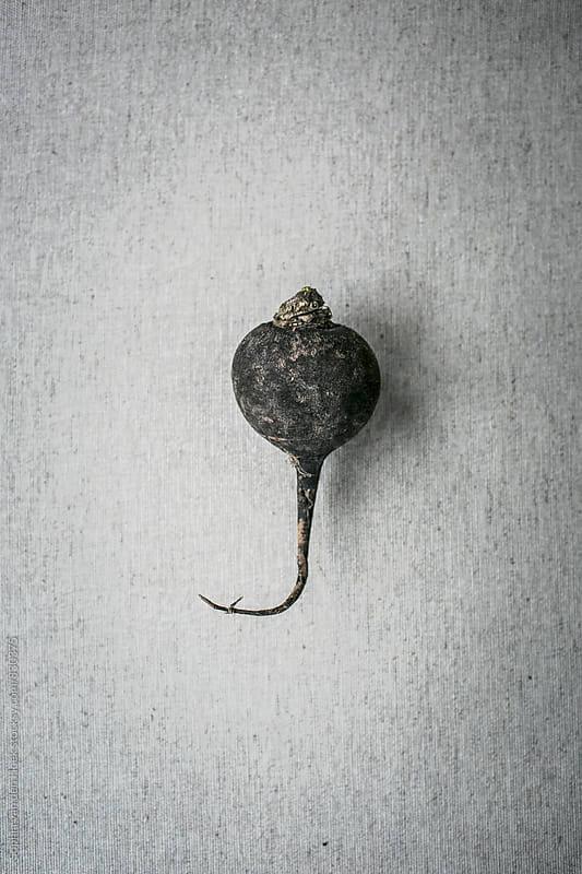 Black radish by Sophia van den Hoek for Stocksy United