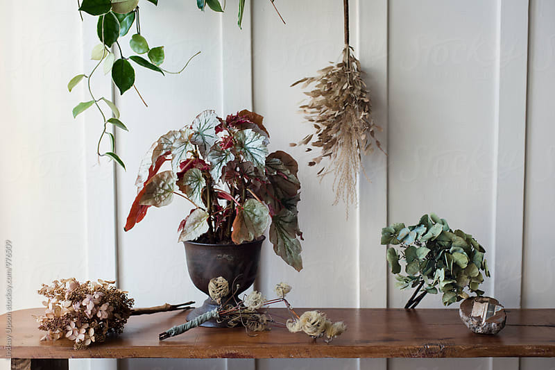 Plant Montage by Lindsay Upson for Stocksy United
