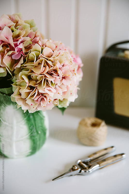 Still life vignette featuring faded pink hydrangea blooms in a vintage jug. by Helen Rushbrook for Stocksy United