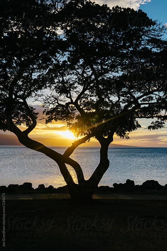 Backlit Tree during Sunset by Jen Grantham for Stocksy United