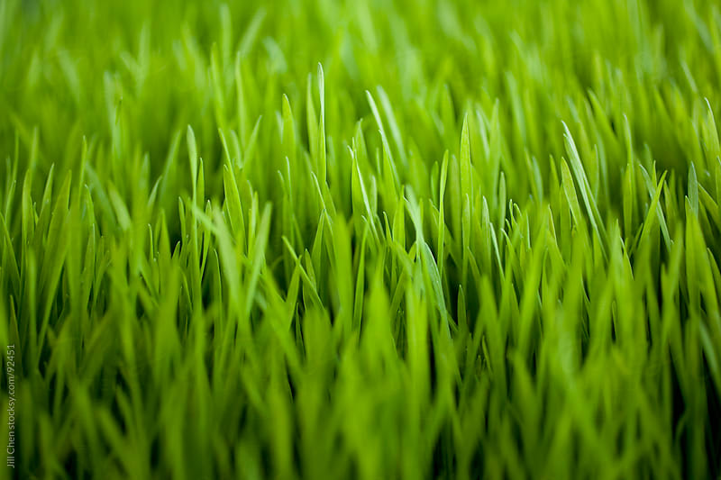Green Grass Background by Jill Chen for Stocksy United