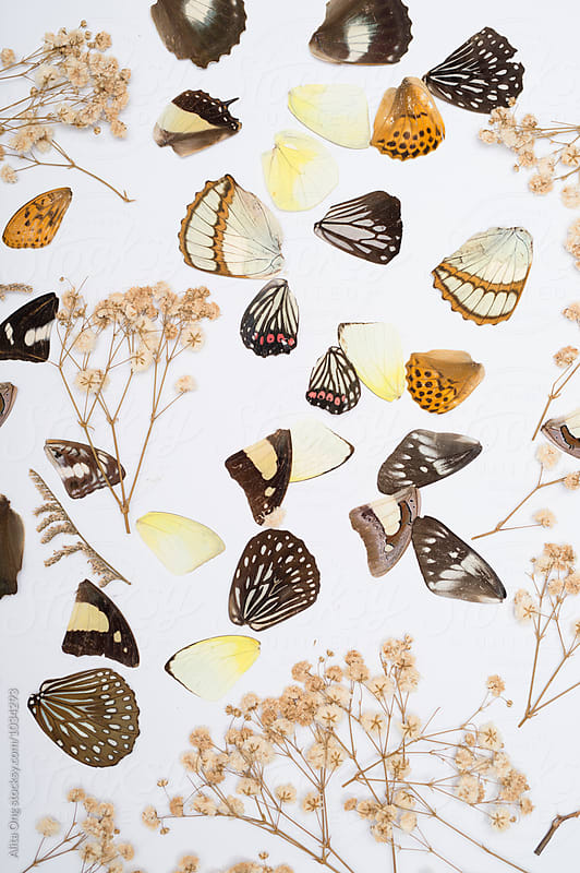 Butterflies wings by Alita Ong for Stocksy United