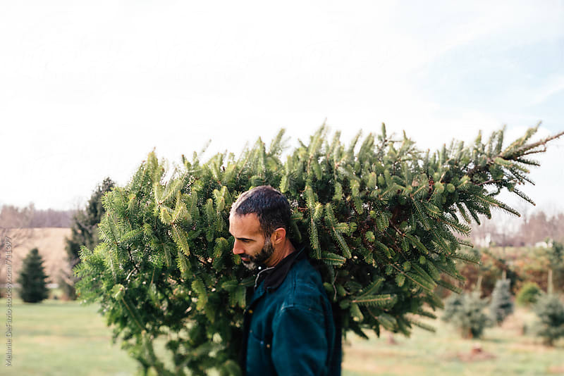 Tree hunting by Melanie DeFazio for Stocksy United