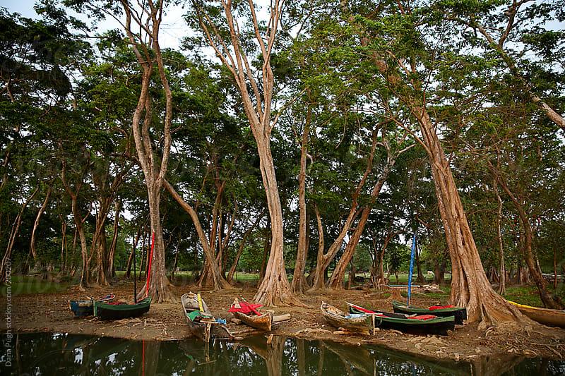 Honduran Fishing Boats by Dana Pugh for Stocksy United
