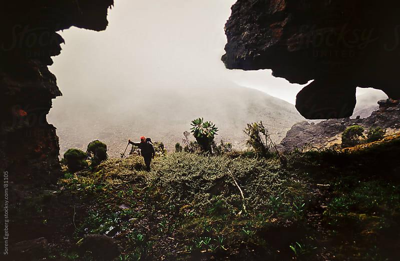 Climber hiking through dense tropical vegetation on Mt. Kilimanjaro by Soren Egeberg for Stocksy United