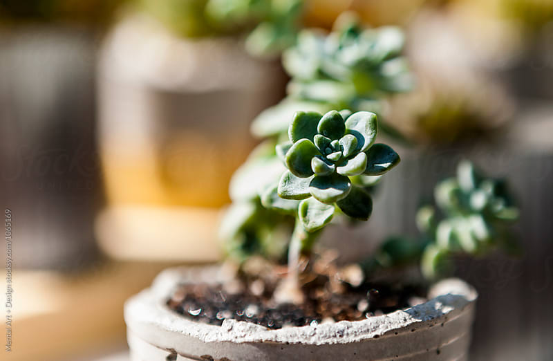 Succulents, Garden centre by Mental Art + Design for Stocksy United